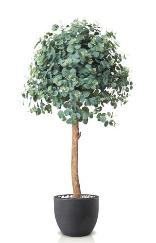 Eucalyptus Topiary 140 cm Green